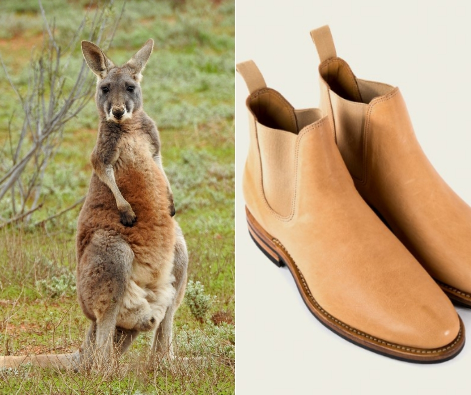 kangaroo featured