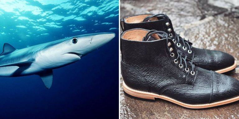 shark leather pros and cons